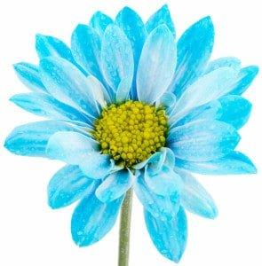 Blue Flower - cropped